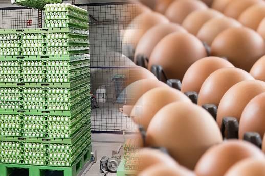 Automatisierte Serienproduktion für Eier